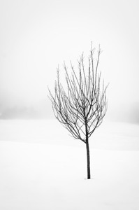 Thin Black Tree