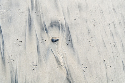 Bird tracks on a beach.