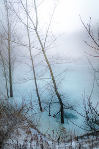 Tilted Misty Tree