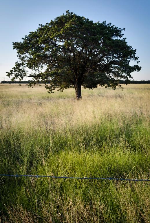 Fenced Field, Leander