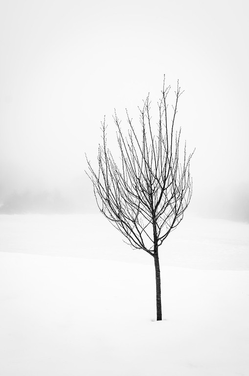 Thin Black Tree